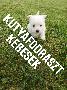 Kutyakozmetikust keresek Németorszägba